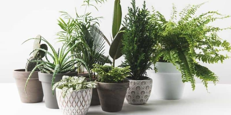 best patio plants