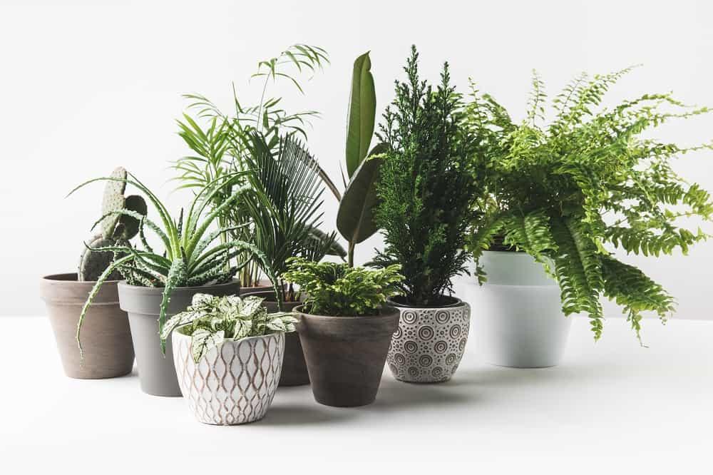 best patio plants