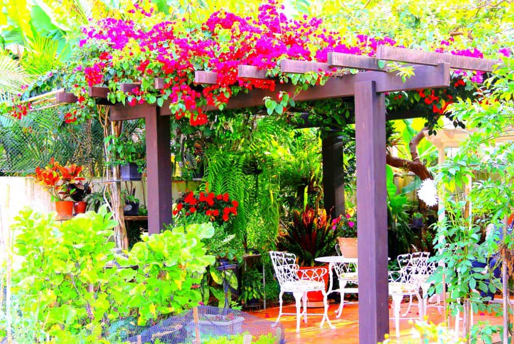 Pergola with colourful plants